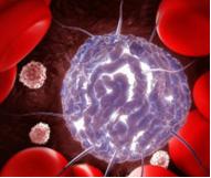 Кръвотворна система