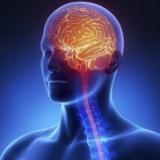 Мозък и ЦНС