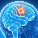 Ендокринна система и хормонален фон